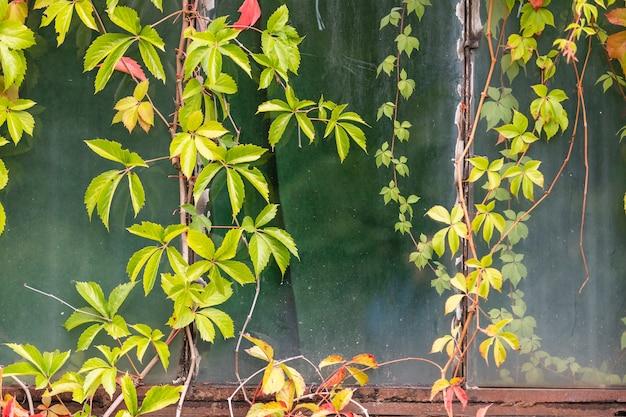 Rośliny pnące na budynku