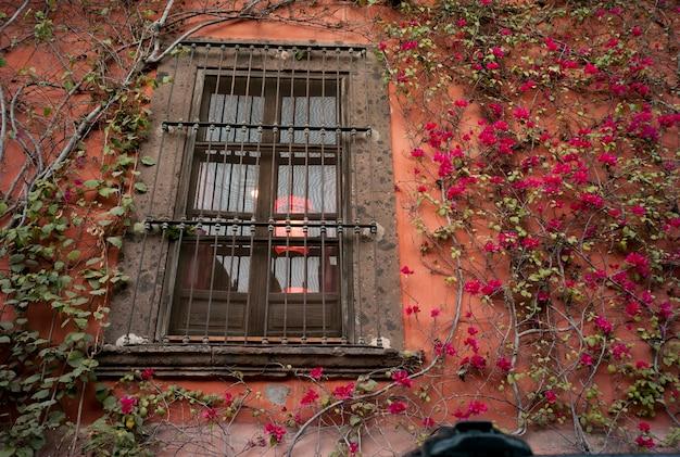 Rośliny rosnące wzdłuż okna domu, san miguel de allende, guanajuato, meksyk