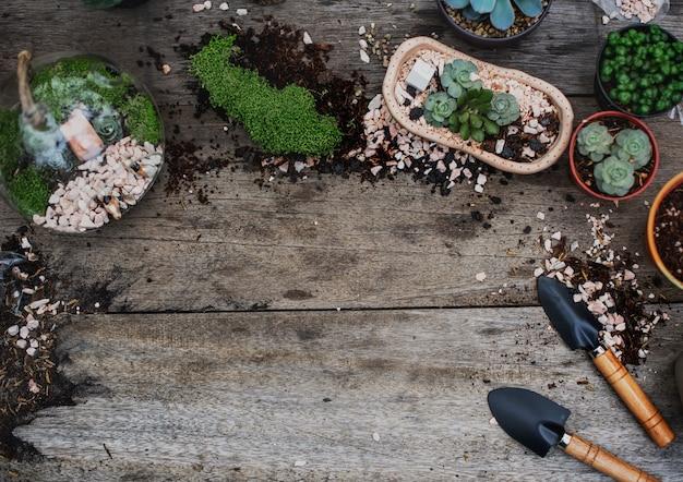 Rośliny terrariowe