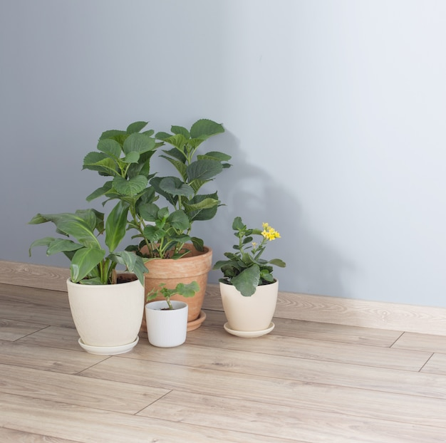 Rośliny w doniczkach na drewnianej podłodze w pomieszczeniach