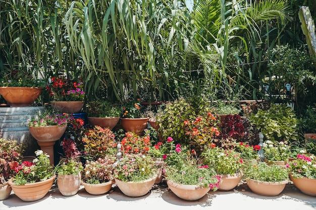 Rośliny w doniczkach na zewnątrz w letnim projekcie zewnętrznym z roślinami i kwiatami koncepcja miejskiej dżungli wysoka ...