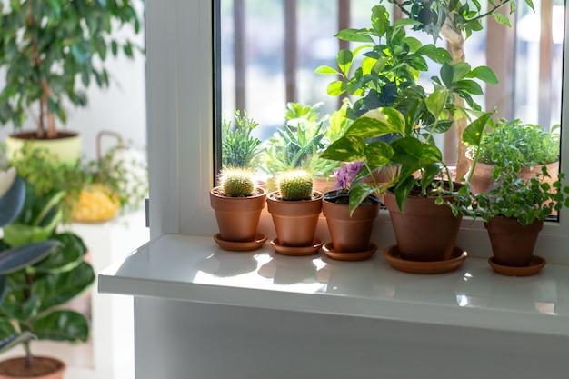 Rośliny w glinianym garnku na parapecie w domu