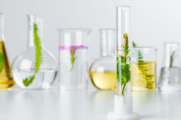 Rośliny w szkle laboratoryjnym na białym tle.
