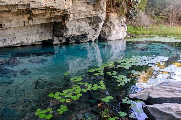 Rośliny wodne i skały w rzece pratinha chapada diamantina iraquara bahia brazylia