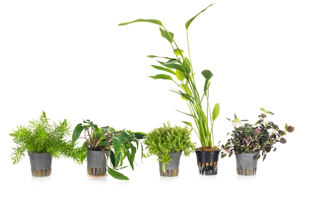 Rośliny wodne przed białym tłem