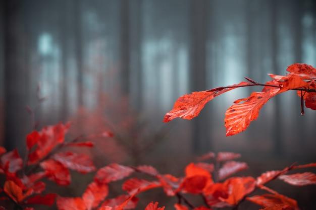 Rośliny z liśćmi pomarańczy w lesie