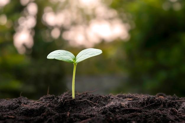 Rosnąca roślina na glebie z rozmytym tłem roślinności