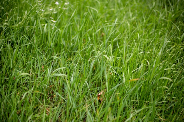 Rosnąca trawa na ziemi - dobra na tapety