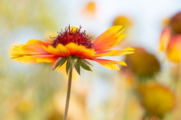 Rosnące i kwitnące kwiaty jako tło