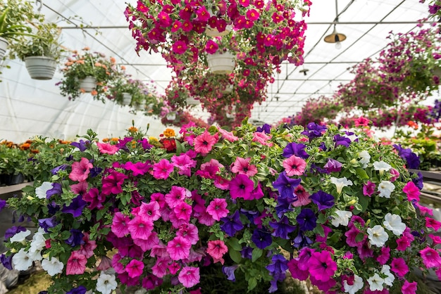 Rosnące kwiaty rosnące wewnątrz szkółki szklarniowej. zadbaj o rośliny