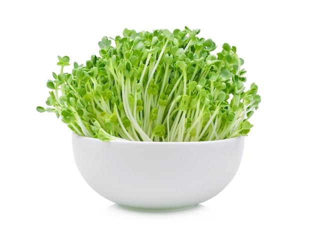 Rosnące mikrozielone na białym tle