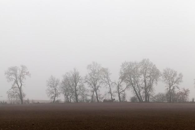 Rosnące na horyzoncie drzewa przesłonięte gęstą mgłą w jesienny poranek