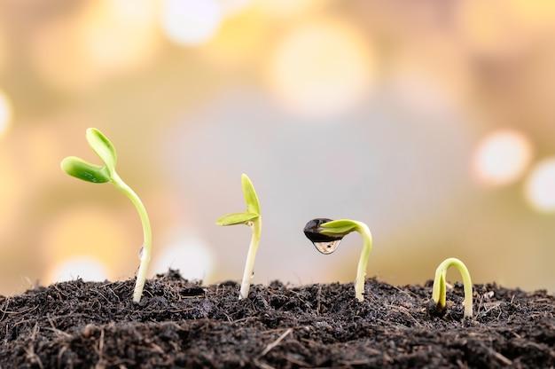 Rosnące nasiona