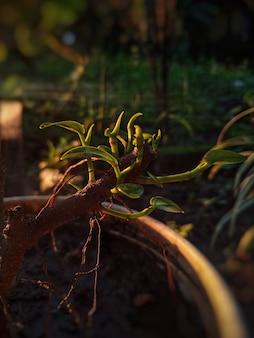 Rosnące pąki drzew darmowe zdjęcie