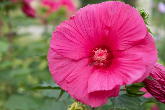 Rosnący i kwitnący ogromny kwiat