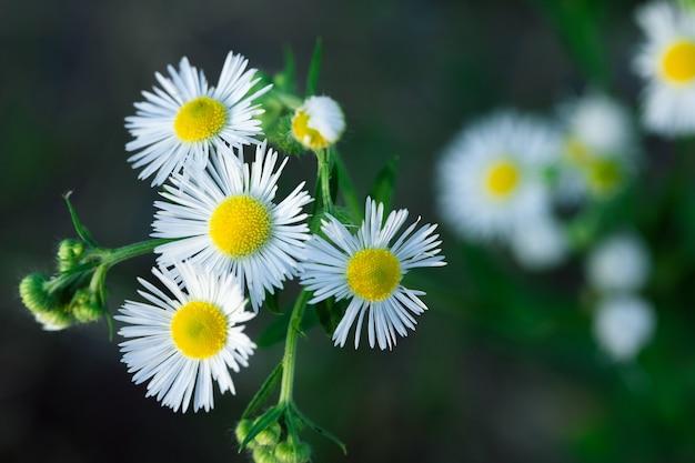 Rosnący kwiat na tle roślin