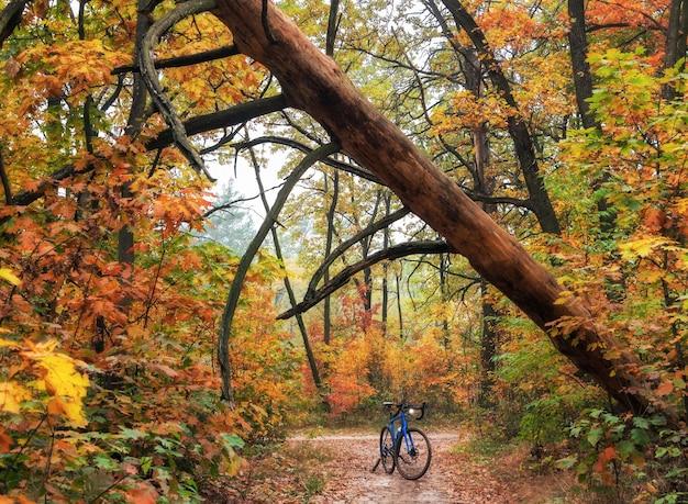 Rower w lesie jesienią z zwalonym drzewem nad szlakiem. jazda na rowerze po lesie.