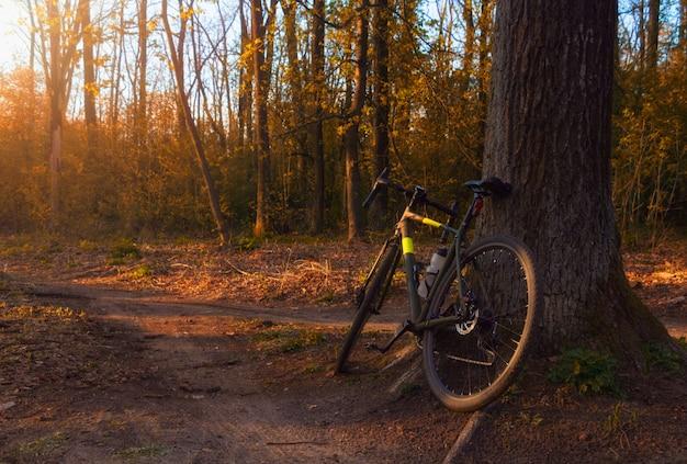 Rower żwirowy stoi w pobliżu drzewa w pięknym lesie o zachodzie słońca.