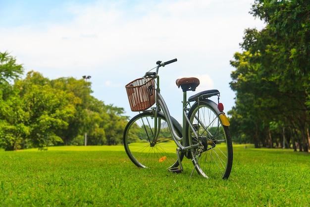 Rowery w parku