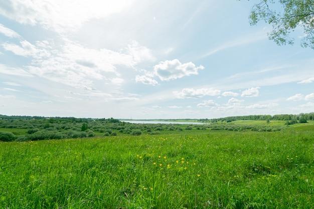 Równa łąka z zieloną trawą i żółtymi kwiatami oraz jezioro blisko horyzontu w pochmurny letni dzień.