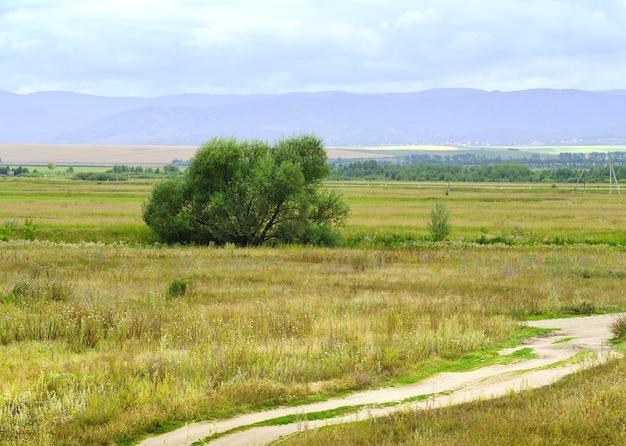 Równina stepowa latem, drzewo wśród trawy na tle gór pod zachmurzonym niebem. syberia, rosja