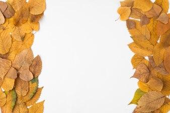 Równoległa kompozycja żółtych i brązowych jesiennych liści