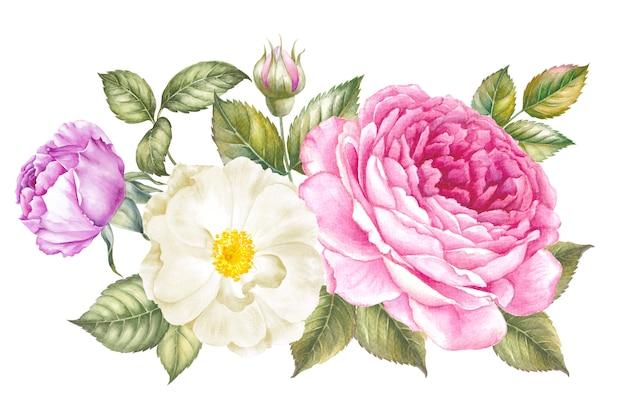 Róża akwarela do projektowania tapet.