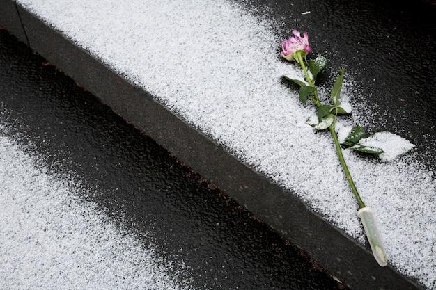 Róża dla pamięci na pogrzebie