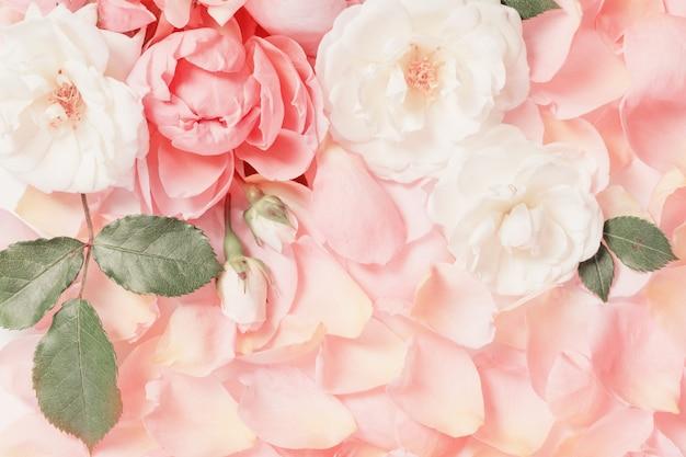 Róża kwiaty i płatki tła
