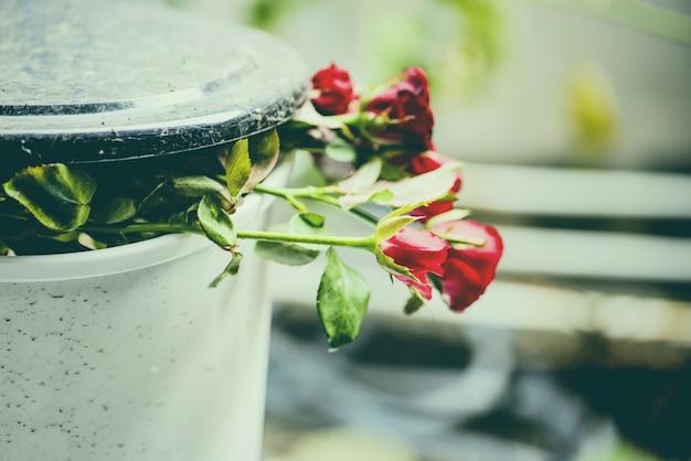 Różane kwiaty w koszu / stare róże na koszu na śmieci łamią mi serce porzuconą miłość w walentynki