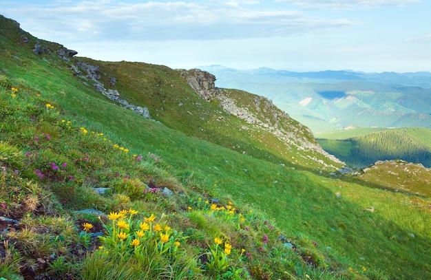 Różanecznik różowy i żółte kwiaty na letnim zboczu góry (ukraina, karpaty)