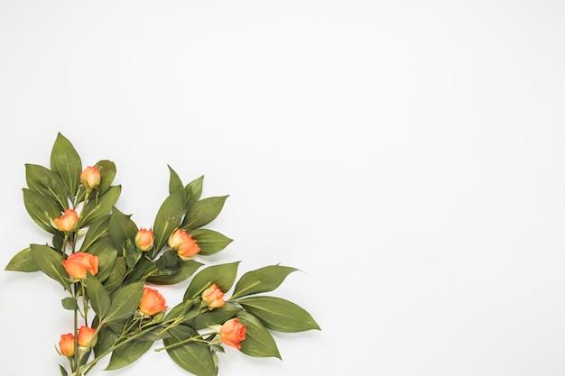 Różani kwiaty z zielonymi liśćmi na stole