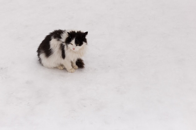 Rozczochrany kot na śniegu