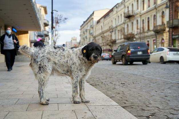 Rozdrobnione bezpańskie psy na ulicy miasta.
