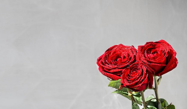 Róże koloru burgunda z kroplami rosy