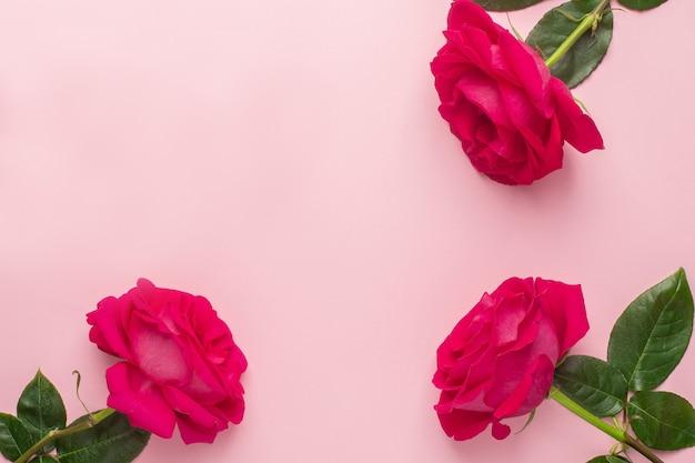 Róże kwiaty na różowym pastelowym tle