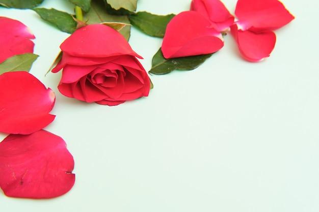 Róże leżące na zielonym tle
