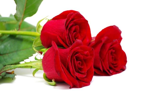 Róże na białej ścianie