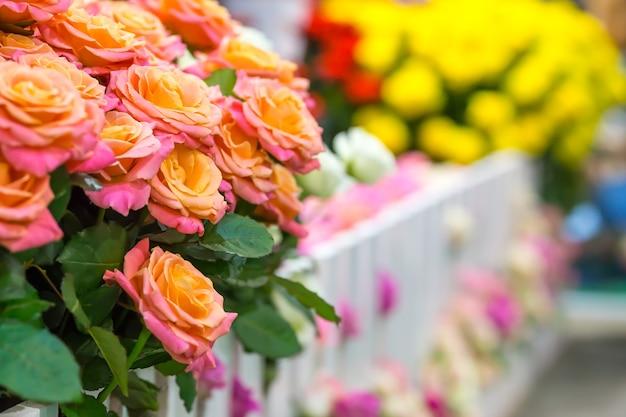 Róże na ogrodzeniu ogrodu na zewnątrz