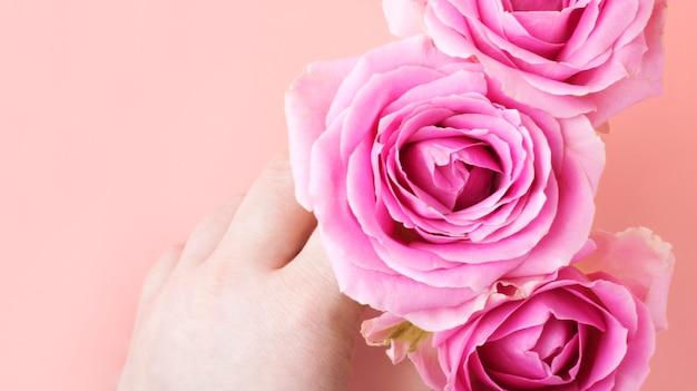 Róże na różowym tle w ręku. koncepcja karty z pozdrowieniami na walentynki, międzynarodowy dzień kobiet