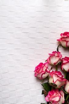 Róże obramiają na białym tle