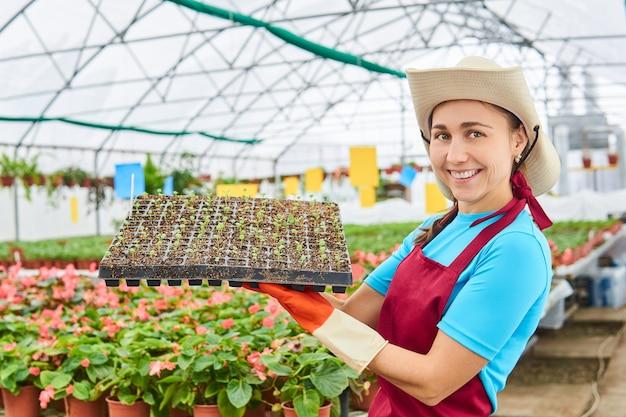 Roześmiana młoda kobieta ogrodnik w szklarni trzyma tacę z sadzonkami