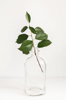 Rozgałęzia się w szklanym wazonie stojącym na stole w pomieszczeniu.