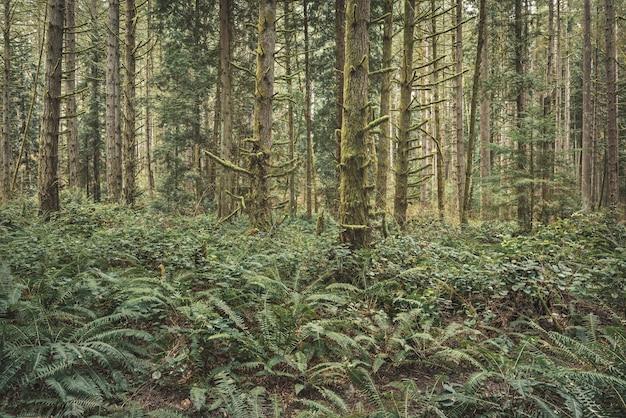 Rozgałęzienie