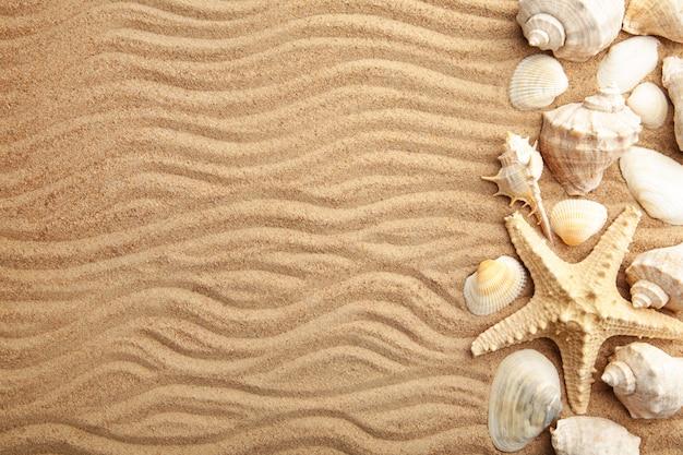 Rozgwiazda i muszle na piaszczystej plaży. koncepcja lato
