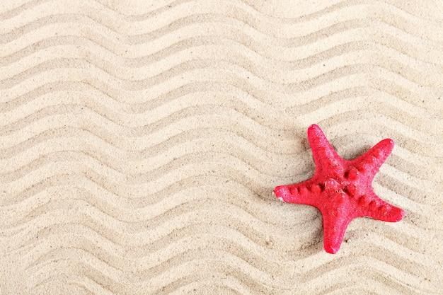 Rozgwiazda i muszle na plaży.