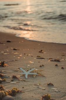Rozgwiazda na brzegu plaży