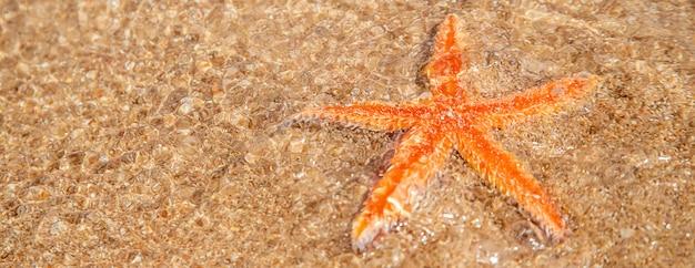 Rozgwiazda na plaży na piasku.