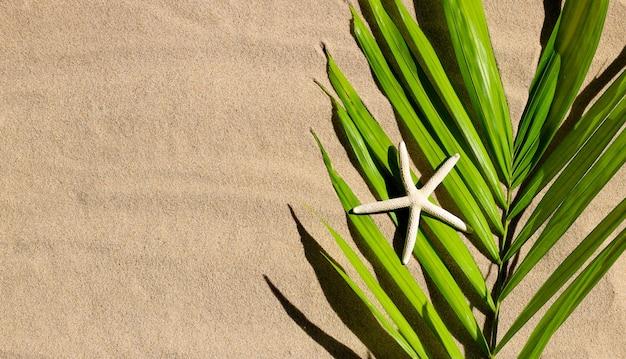 Rozgwiazda na tropikalnych liściach palmowych na piasku. letnia koncepcja tła