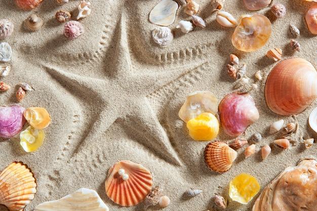 Rozgwiazda plażowa z białym piaskiem drukuje wiele muszli małży